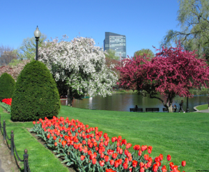 Find your next Boston home this Spring!