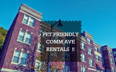 Allston Apartments For Rent January Pet Friendly Rentals Iphone Wallpapers Free Beautiful  HD Wallpapers, Images Over 1000+ [getprihce.gq]
